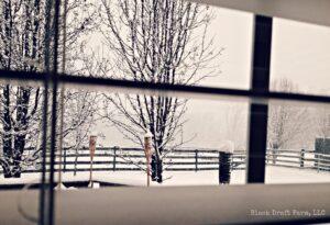 New Year Snow2014